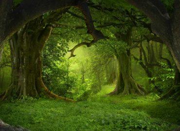 قانونمندی طبیعت